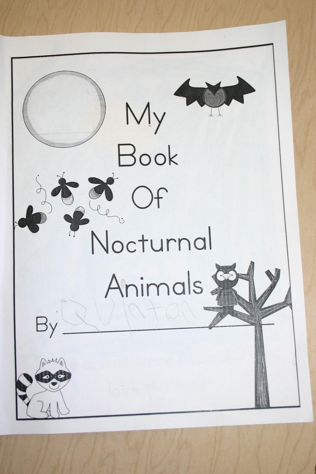 Mrs Bagbys Kindergarten Nocturnal Animals
