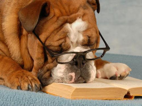 Cachorro idoso: tudo o que você precisa saber sobre o seu cão vovô