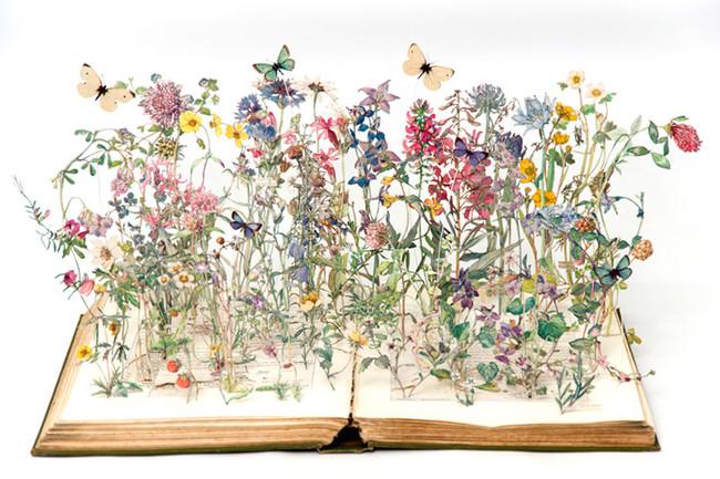 Flores salvajes de las islas británicas