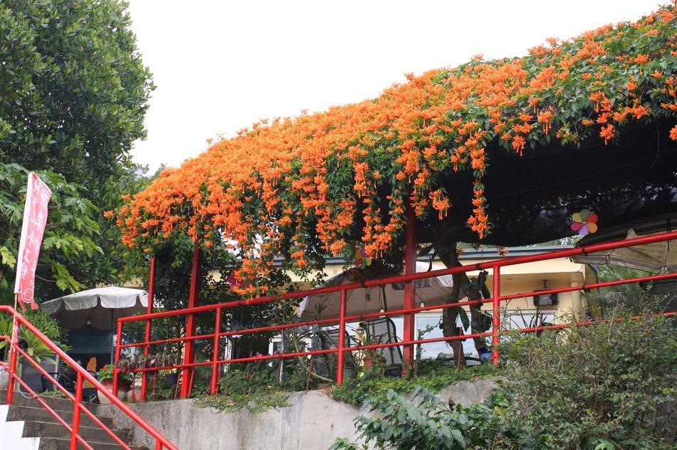 古坑美食-柳岸咖啡庭園餐廳