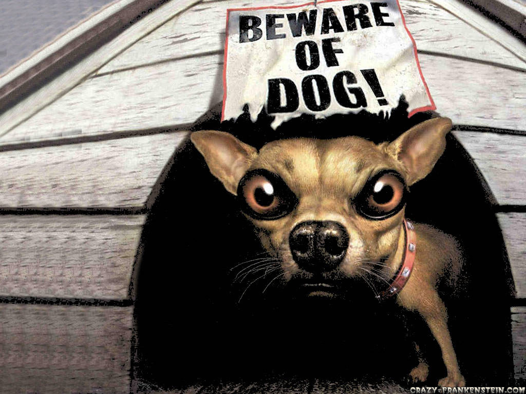 http://1.bp.blogspot.com/-0eUxqYcy4ZQ/Te9CMbB98zI/AAAAAAAAAA0/1MSWSMeVxh8/s1600/beware-of-dog-funny-animal-wallpapers%20-%20Copy.jpg