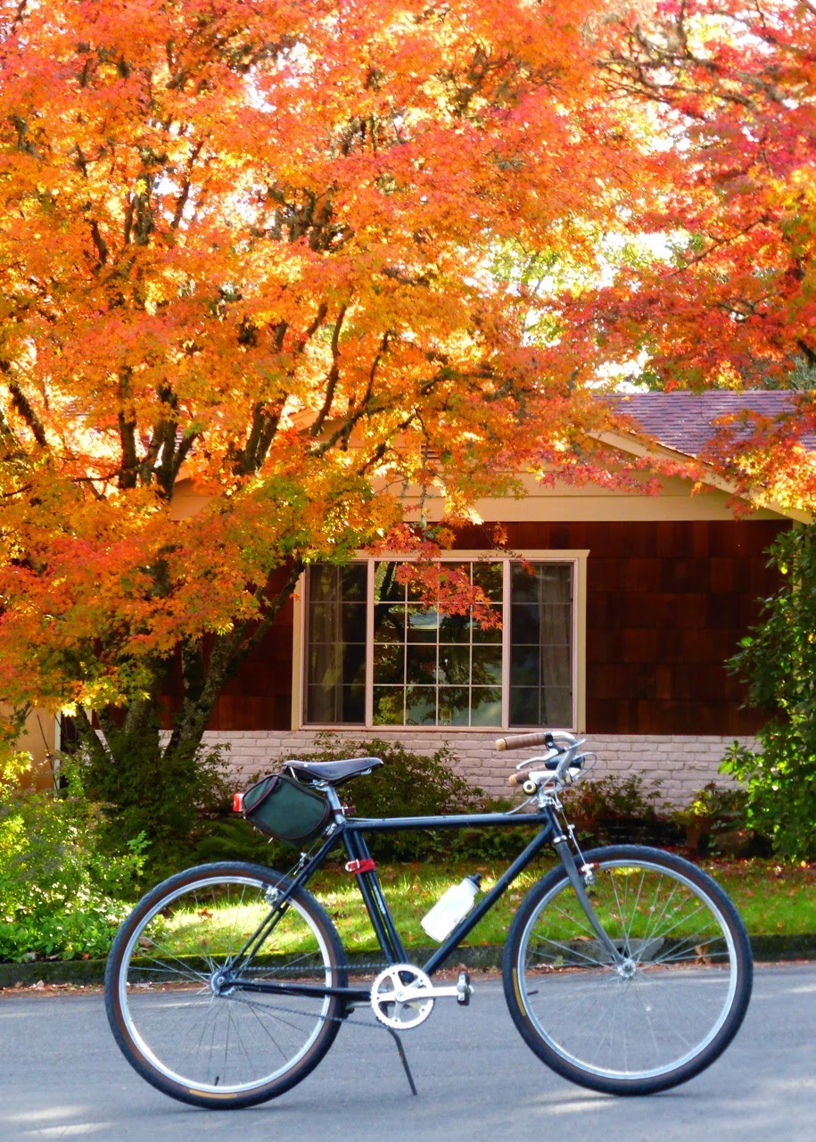canvas saddle bag, leather saddle, autumn, fall color, Japanese maple, Eugene