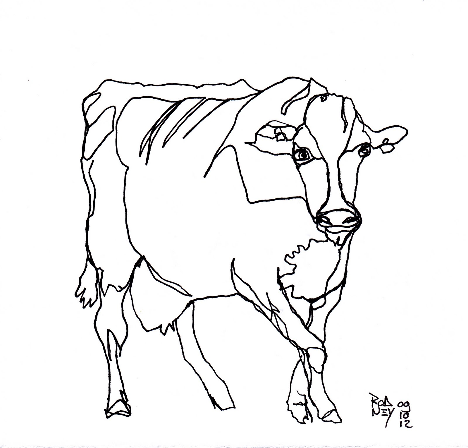Contour Line Drawings Of Animals : Rodney van den beemd continuous cow