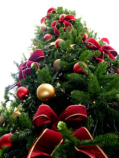 Christmas Tree Pictures