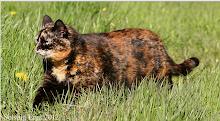 Warrior-Sweetriver-She-cat