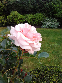 Mijn rozen, zomer 2013