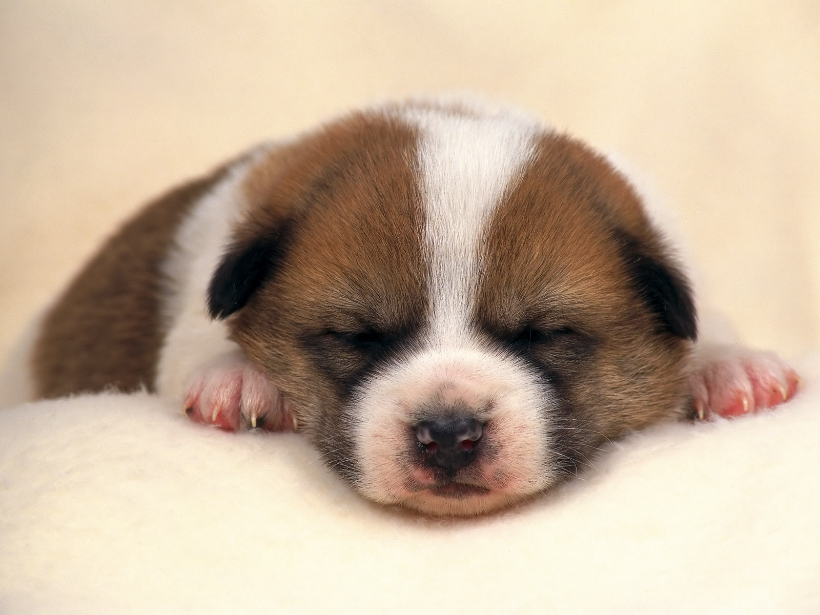 hd cute puppy pictures | high quality puppies cute picture | nice