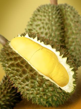 Teknis Budidaya Durian dengan Nasa