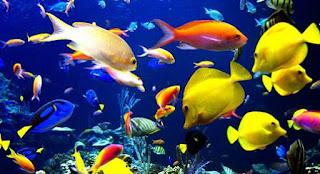 Sifat dan Gerakan Air Laut Serta Penggolongan Laut