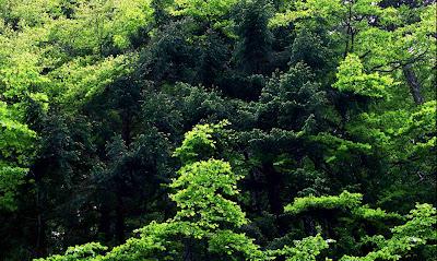 Floresta densa numa foto de  Yasonobu Kobaiasch
