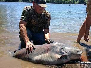 Fishing reports fishing news at oklahoma lakes for Oklahoma lake fishing reports