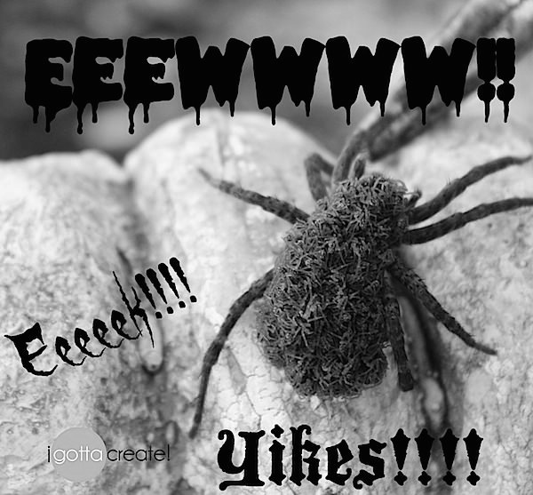 Wolf spider with babies on her back. Ewww! | Visit I Gotta Create!