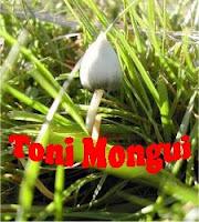 TONI MONGUI