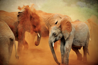 elephants are running in desert