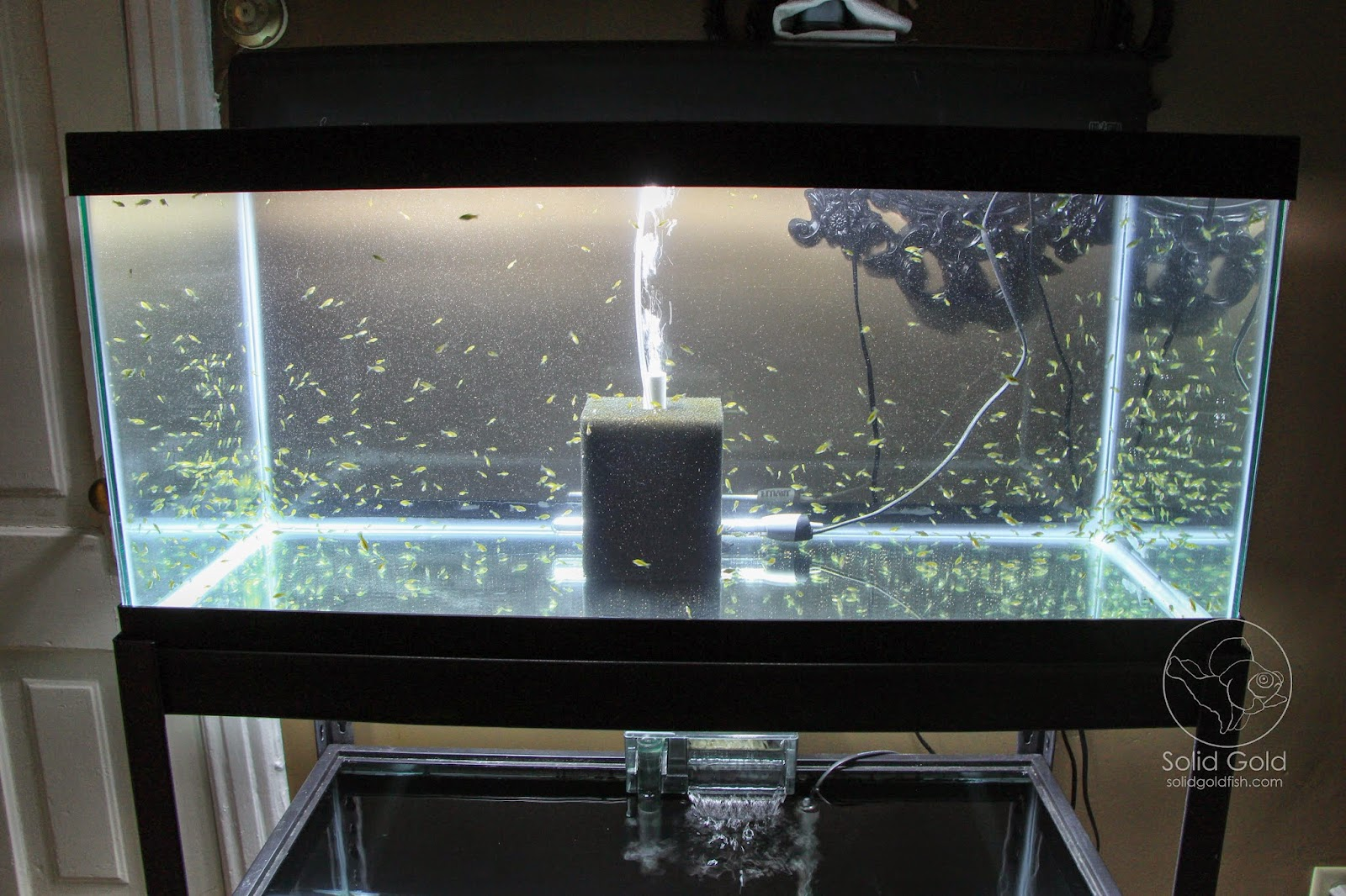 Fish Tank Shelf : Solid Gold: The Perfect Rack for 40 Gallon Tanks