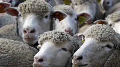 1543880 pecore - Distrazioni mediatiche..e intanto altri 2,8 miliardi di euro vanno al MES