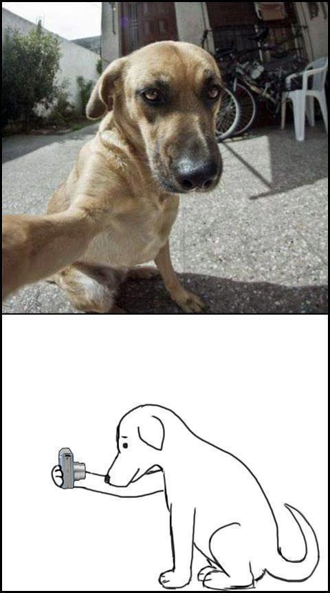 Dog Self Shot
