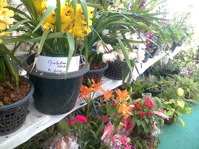 flowers in ahmedabad