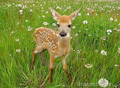 Cute+Deer+picture+(13).jpg
