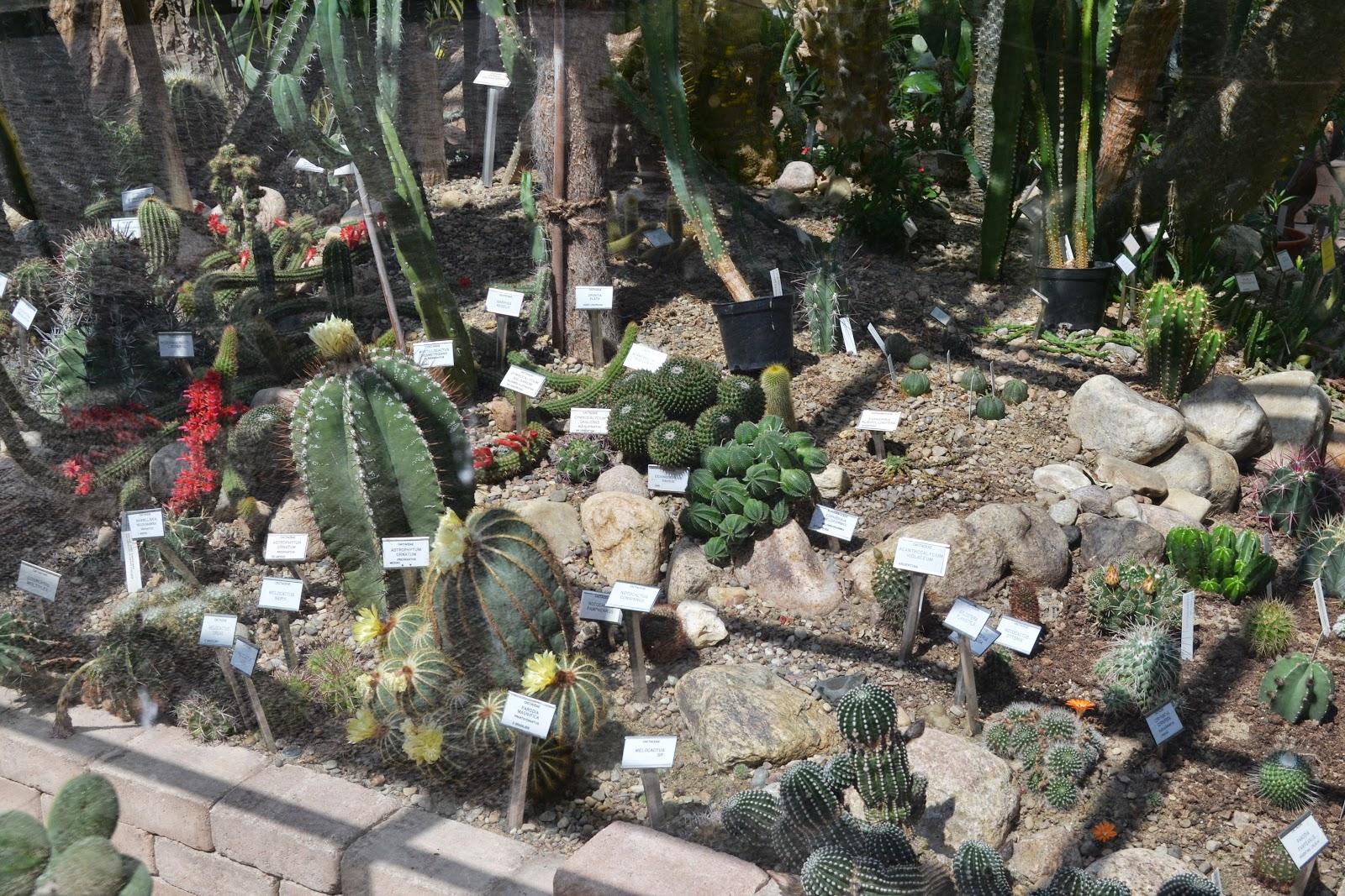 cactus plant inside greenhouse, botanical garden, lund
