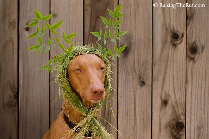 Reindeer Dog RaisingTheRuf Nezo Art