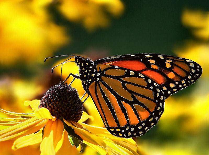 Welcome to the Living World: Butterfly, Moth & Caterpillar ...