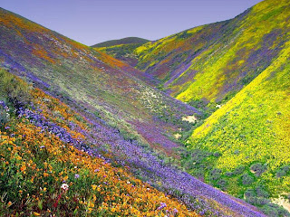 Valley-Of-Flowers-tr