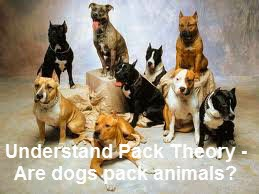 Are dogs pack animals? - Discover How to Understand Pack Theory