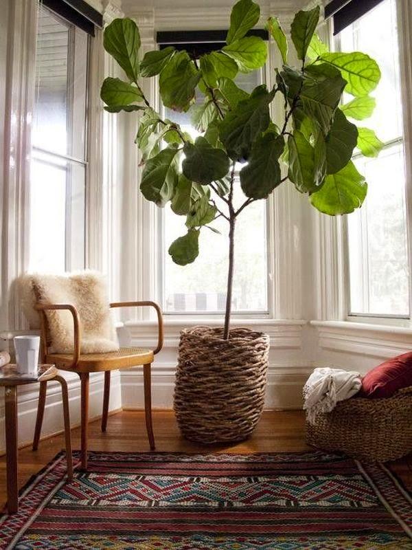 Conseils d co et relooking les meilleures plantes pour for Les plantes interieur