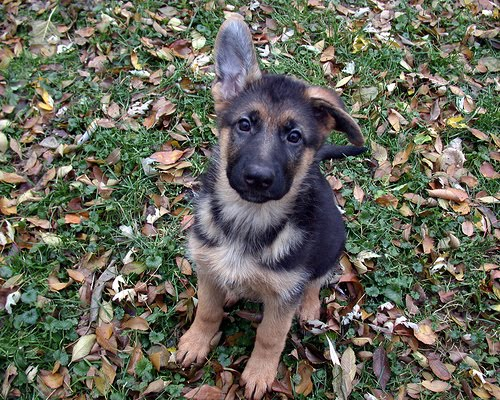 Lull a first impression of the monks of new skete i know a couple of people who recently purchased german shepherd pups from breeders you can probably guess my reaction to this method of dog acquisition spiritdancerdesigns Image collections