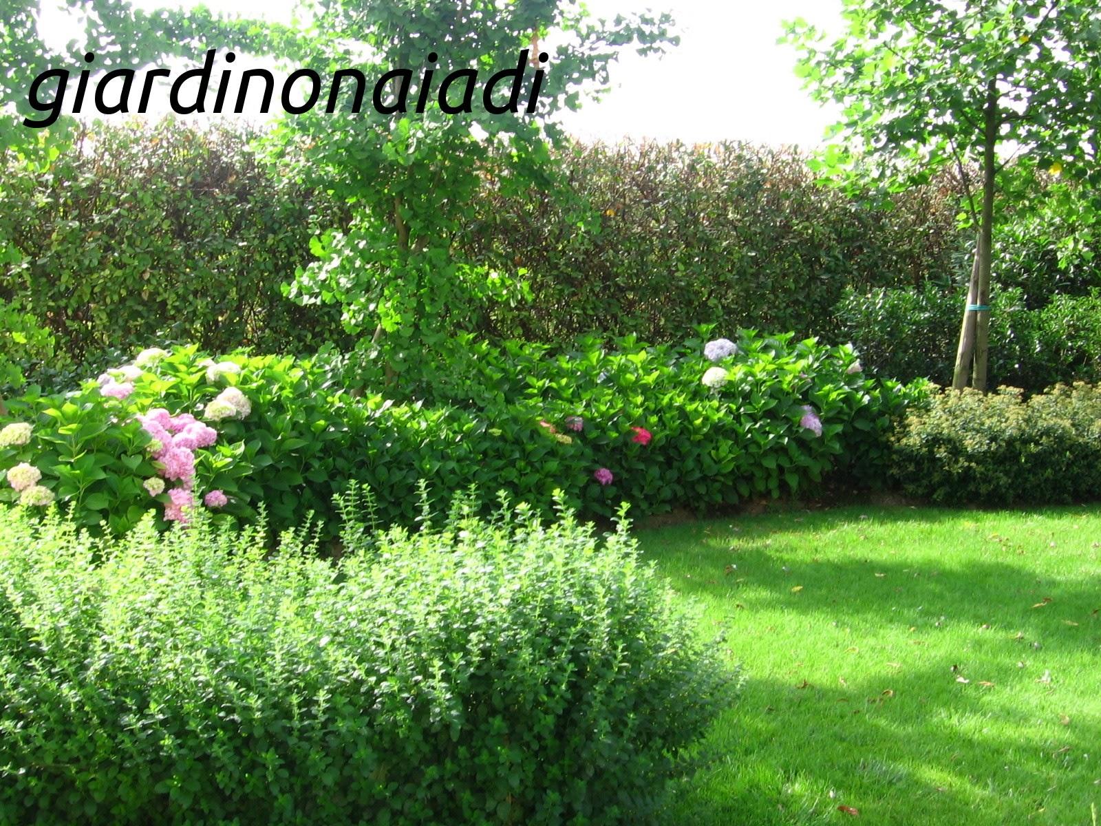 Il giardino delle naiadi progettare bordure e aiuole for Progettazione aiuole