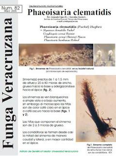Phaeoisaria clematidis