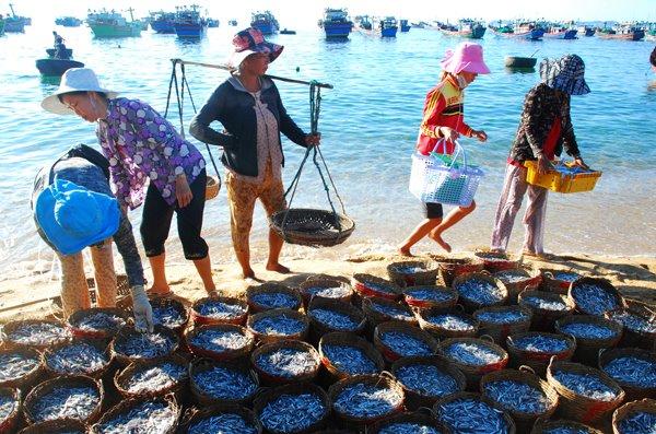 Nghề đánh bắt cá phát triển ở Phú Yên