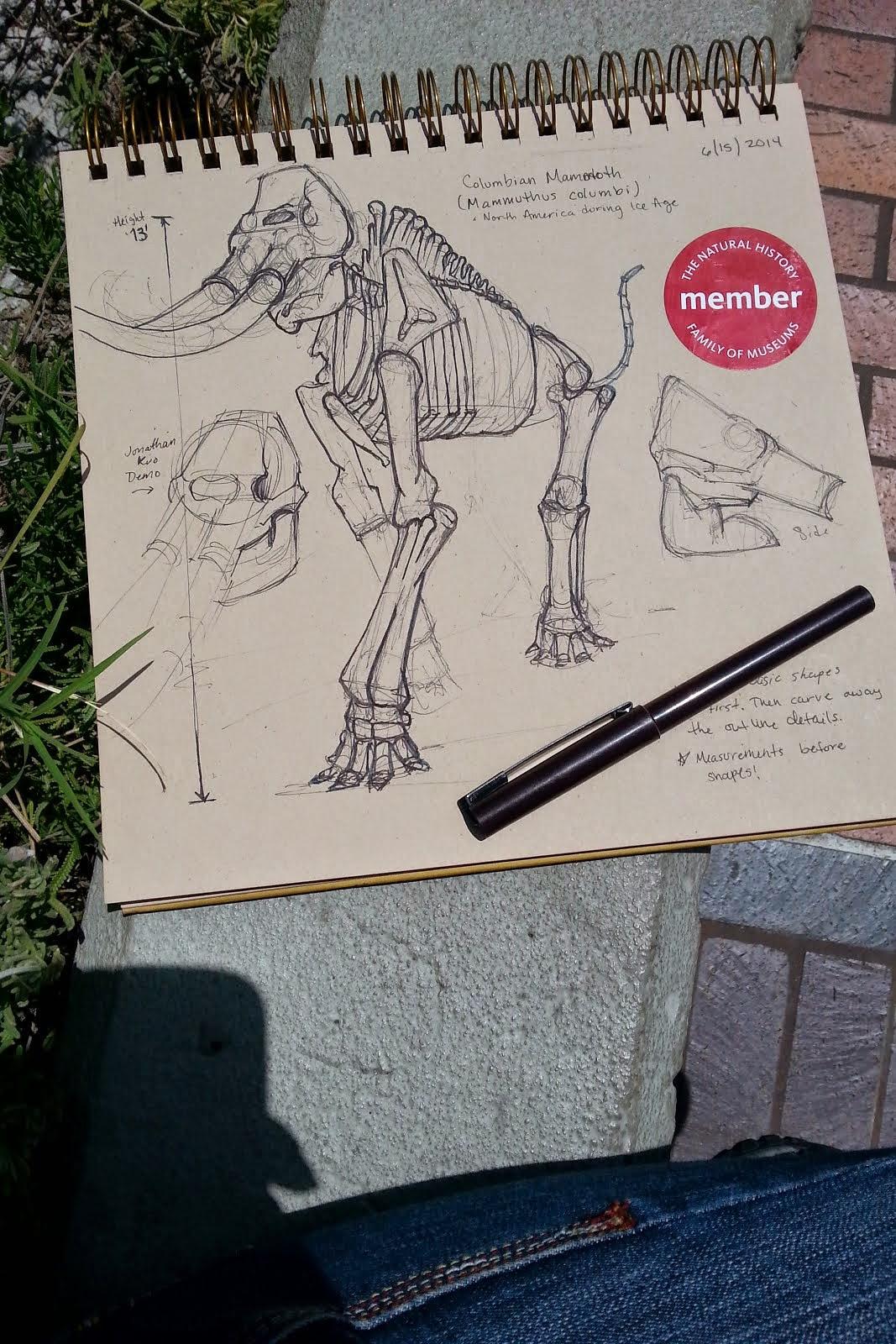 the art of Rachel D. Mark: CDA Animal Anatomy Sketches - Spring 2014