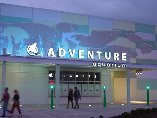 Heavenly Blossoms Our Trip To Adventure Aquarium