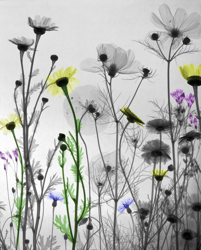 03-Bouquet-of-wild-flowers-Arie-van-t-Riet-Colored-X-ray-Photographs-of-Nature-www-designstack-co