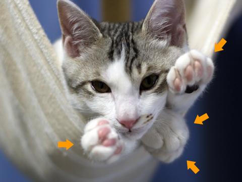 ハンモックの一方向から全部の足を出す子猫