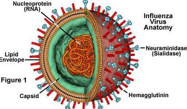 Gangguan Pernafasan Akut Akibat Dari Infeksi Virus ...