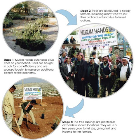 plant olive trees palestine