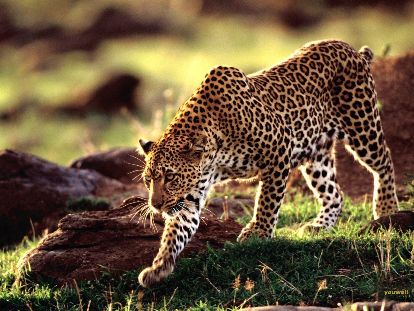 Las musas animales de grandes de la cultura (FOTOS)