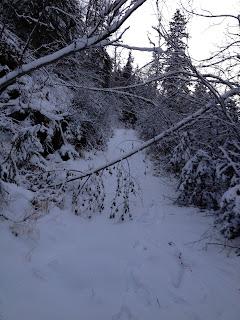 Trail.gold. trees, fallen