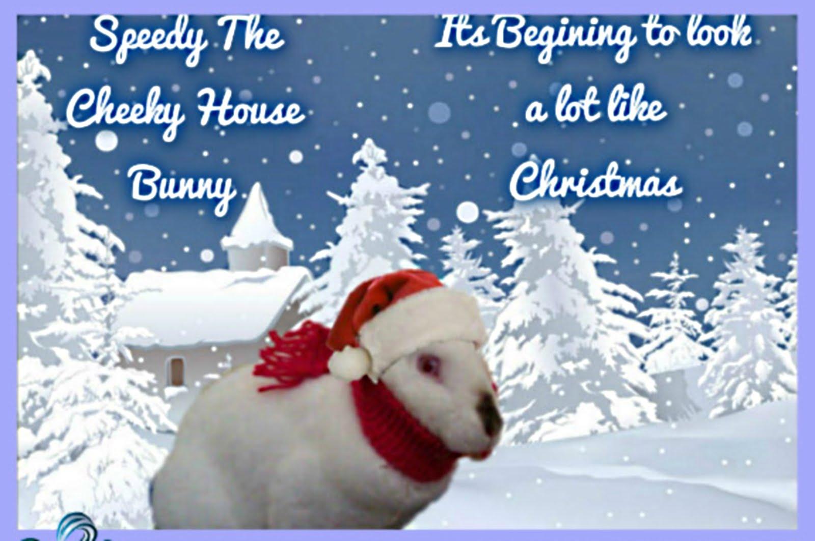 Bunny Blog - Speedy