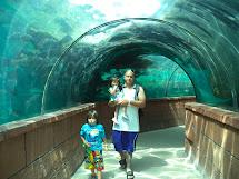 Atlantis Bahamas Aquarium