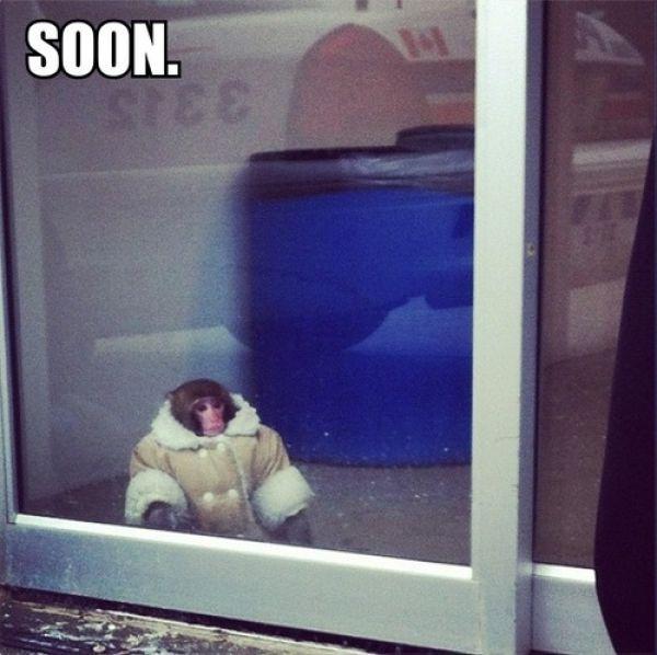 Ikea Monkey Meme Soon The Best Ikea M...