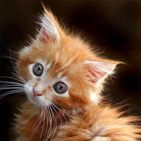 4zampedisimpatia quanti sono i falsi miti sui gatti for Senatori quanti sono