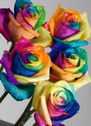 ПРЕДСТАВЬТЕСЬ, ПОЖАЛУЙСТА! - Страница 13 Real_Rainbow_Roses_by_HappyRoses