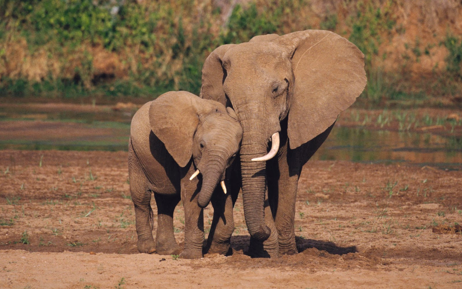 Elefante tierno imagenes - Imagui
