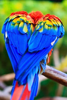 Pictures of Exotic birds of the World.