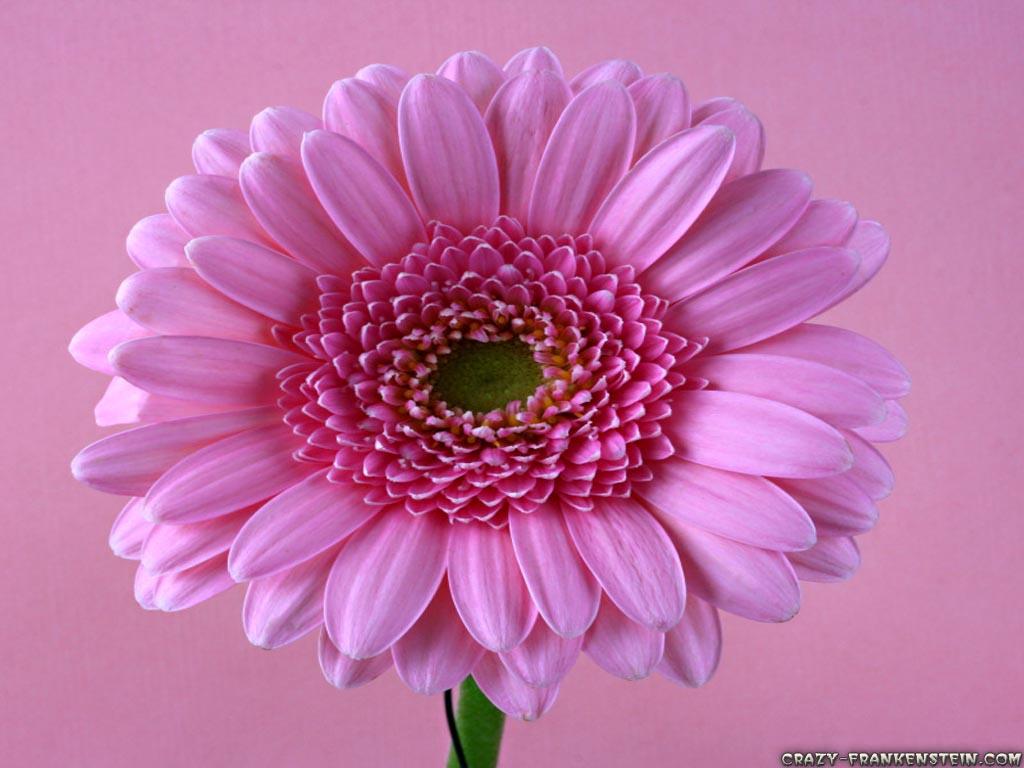 http://1.bp.blogspot.com/-0m4NI89LkJQ/T8zE6SEHMzI/AAAAAAAAEgI/Dw4lgM4Mtn4/s1600/Flower-wallpaper-22.jpg