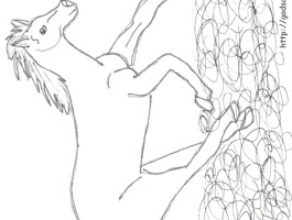 Wild Horse Coloring Pictures